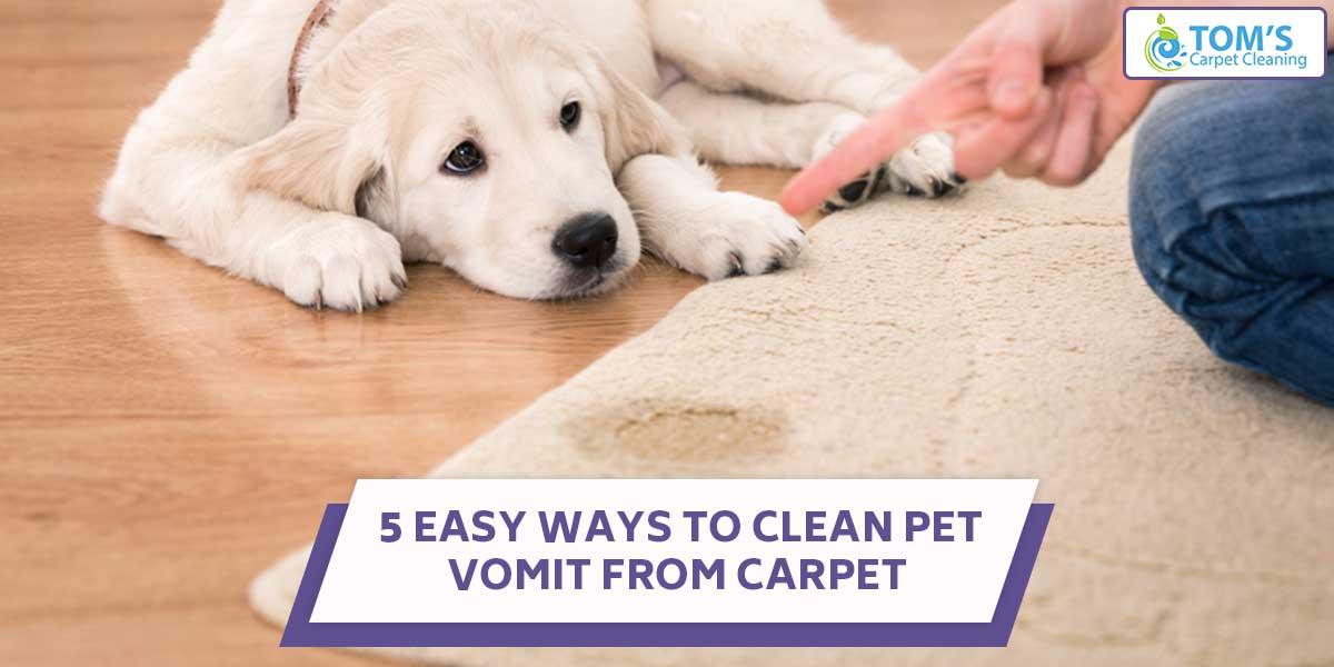 5 Easy Ways To Clean Pet Vomit From Carpet