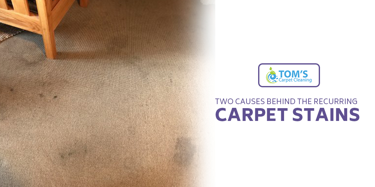 Two Causes Behind the Recurring Carpet Stains