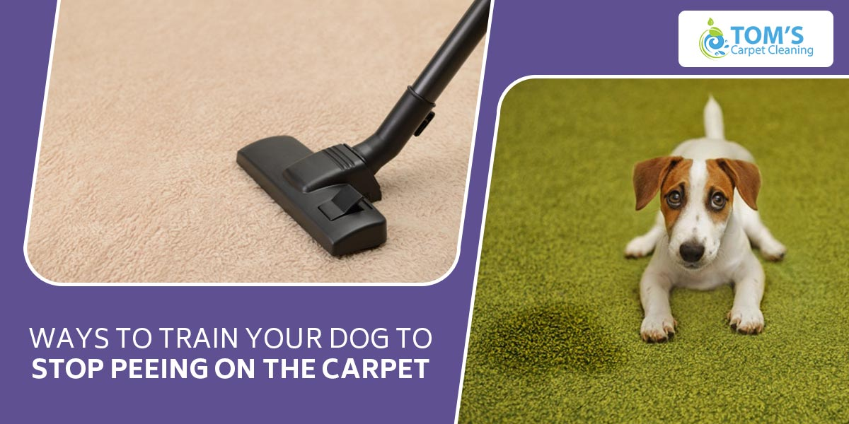 Ways to Train Your Dog to Stop Peeing on the Carpet