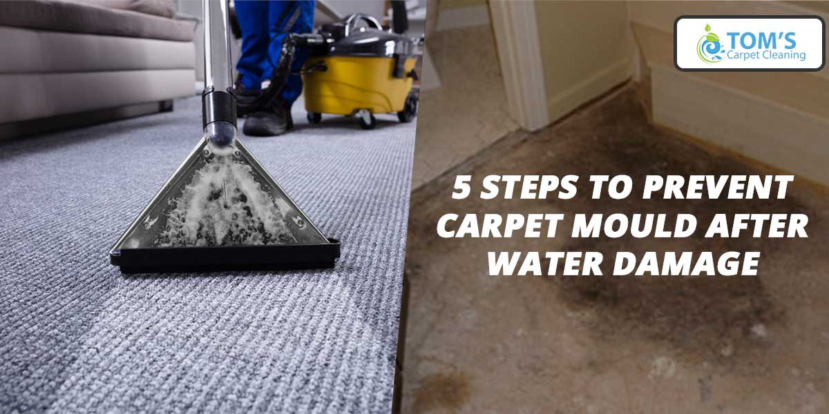5 Steps to Prevent Carpet Mould after Water Damage