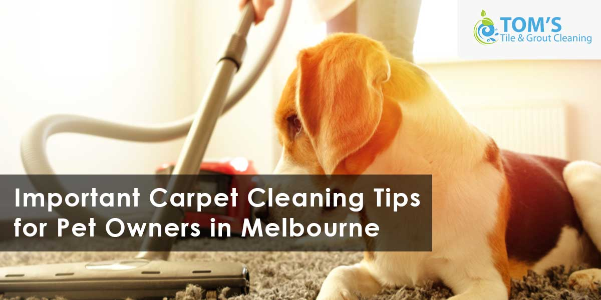 Important Carpet Cleaning Tips for Pet Owners in Melbourne